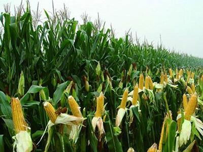 农业农村部:大豆市场供给以进口为主的格局不会变